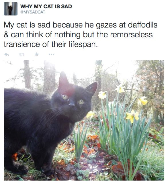 Best My Cat Is Sad Images On Pinterest Animal Pictures - 18 hilarious sad cat problems that might explain why your cats so moody