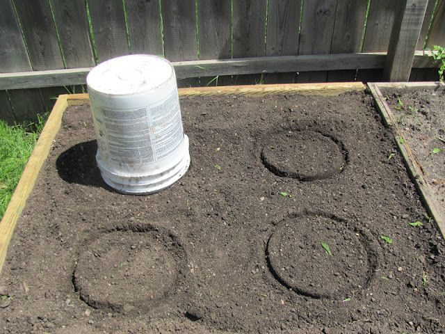 Three Sisters | Plant corn in a circle for better pollination. Eight seeds around each circle. Use 5 gal. bucket to mark. In dryer climates make a well in the middle to catch the water.