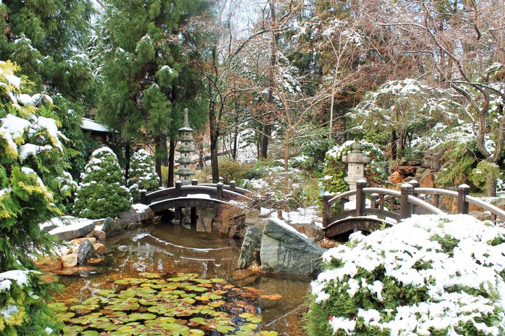 A light December snow in the Japanese-style Garden at @Shelly Figueroa Donnelly Eisenbeis Estate Museum & Gardens