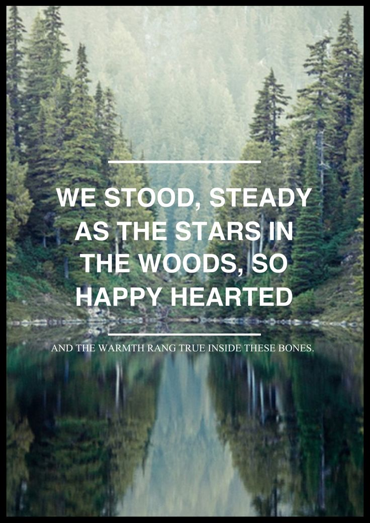 Steady in the woods