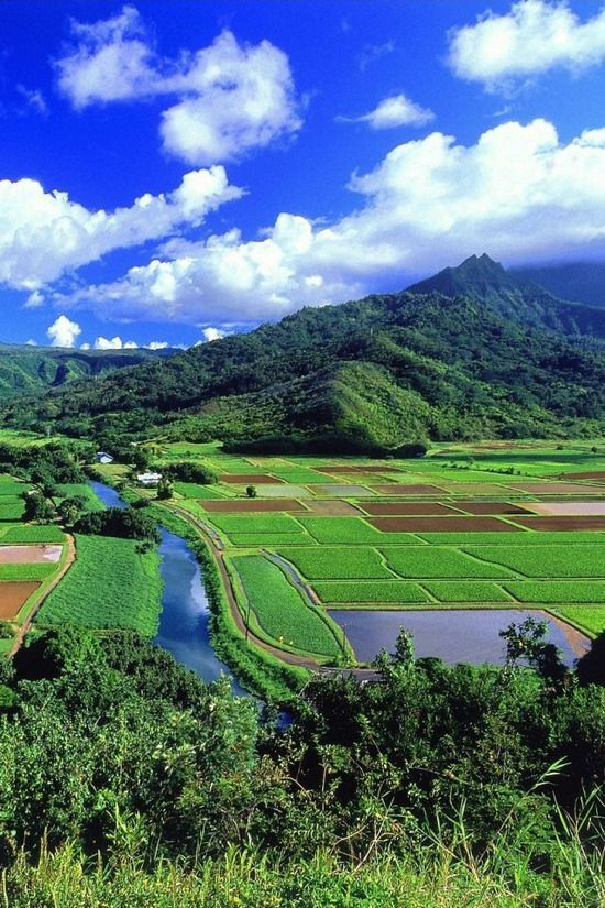 Coutryside in summer, Japan 田園風景