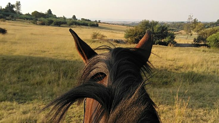 No better view than between these ears #Jarizujozini #horse #outride #mare #bay #SAwarmblood #ears #mane #kellowpark