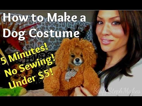 Super Easy *No Sew* Dog Costume! Wouldn't work on my big ol' lab, but this is waaaaay cute.