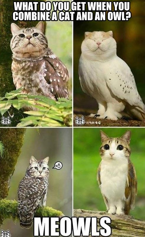 When you combine cat with owl!