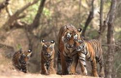 FORESTE India. Mulai, da solo crea una foresta di 550 ettari Con le sue sole forze, Jadav 'Mulai' Payeng, nativo indiano, ha trasformato un esteso banco di sabbia lungo le rive del fiume Brahmaputra in una rigogliosa foresta di 550 ettari. Nel corso di trent'anni una zona sterile è stata invasa da una grande biodiversità di flora e fauna selvatiche, comprese specie in via di estinzione.