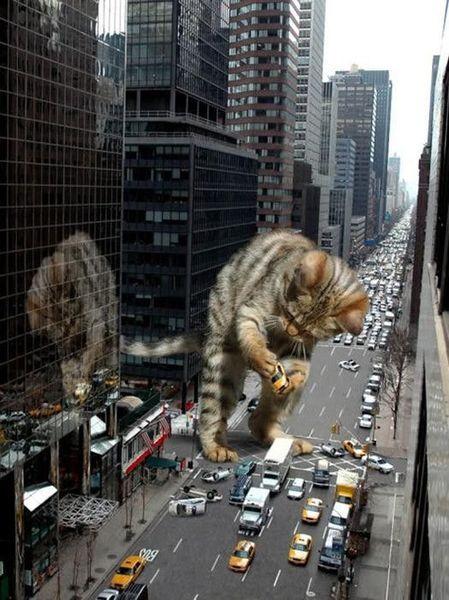 Top 20 des photos de chats géants, ILS SONT LA !!!!