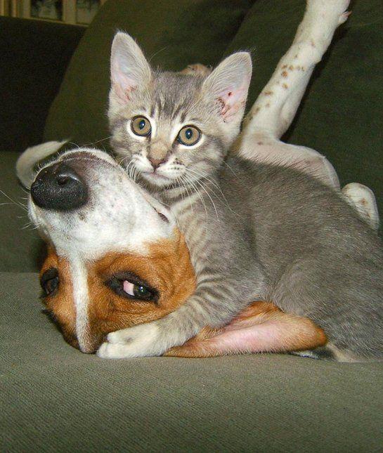 1000+ Ideas About Animal Hugs On Pinterest