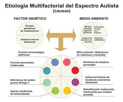 Logopedia en especial: Etiología multifactorial del espectro Autista (Causas)