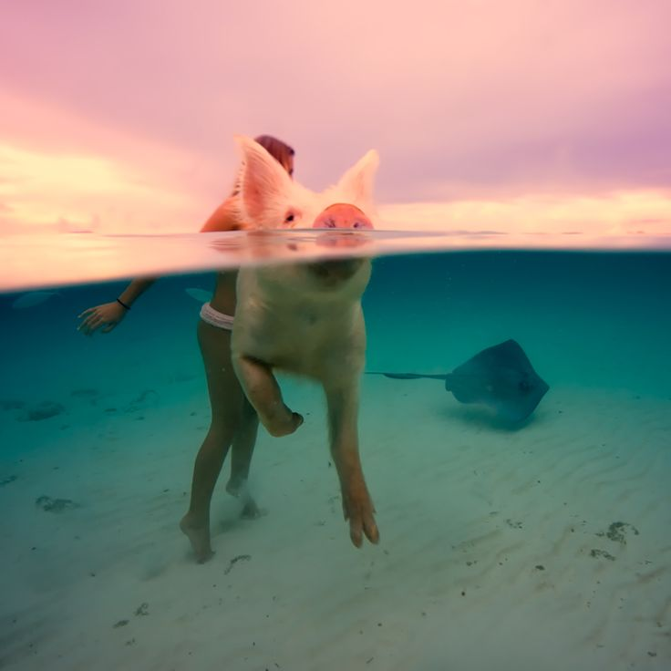 Bahamas Girl Sacha Kalis Exuma Pigs