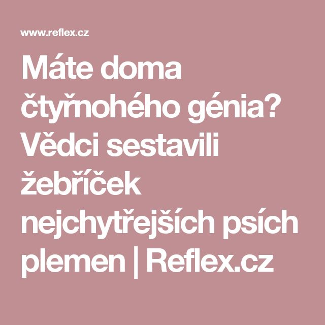 Máte doma čtyřnohého génia? Vědci sestavili žebříček nejchytřejších psích plemen | Reflex.cz