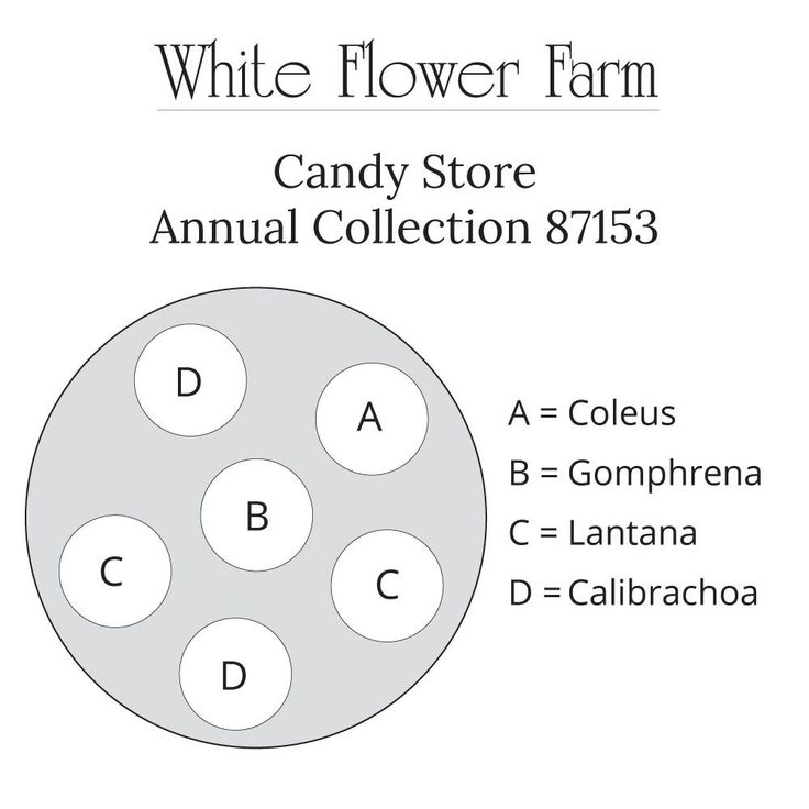 Candy store annual collection in 2020 white flower farm