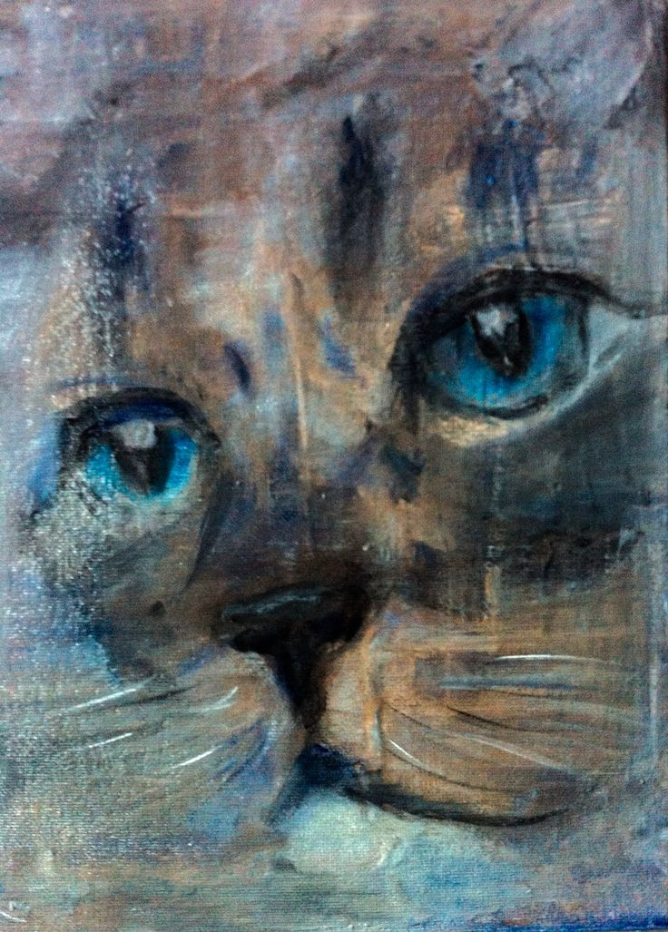 Blue eyed cat. Randy Etty 2015