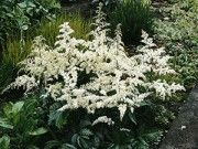 Garden Plants for Sale Under $12|Buy in Bulk & Save|GreatGardenPlants.com