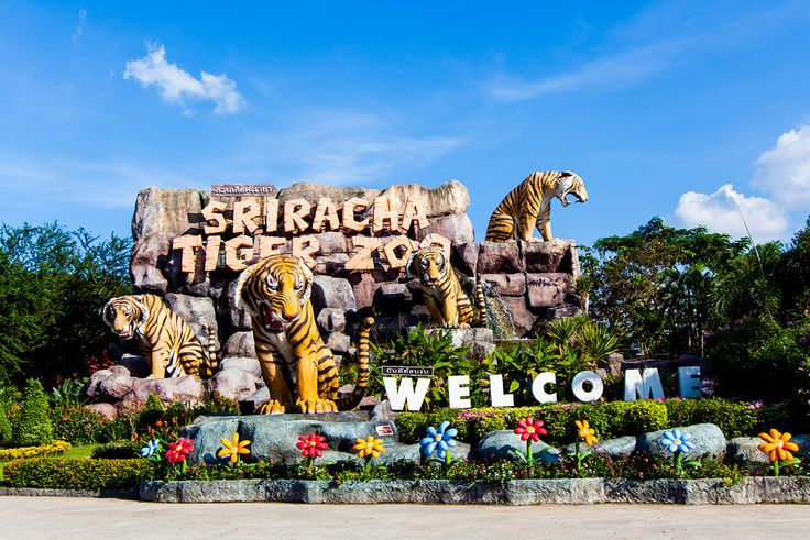 The Sriracha Tiger Zoo is an amazing tour attraction in Pattaya. Witness never before seen things in your life. #TigerZoo, #pattaya, #AmazingThailand, #sriracha