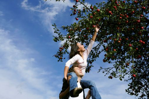 Stock Photo : Woman on man's shoulders, reaching for an apple, Styria, Austria