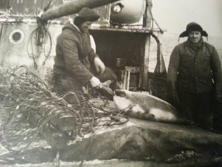 Hisø 1949.Fra fars album,Hans Adrian Haugen,Malangen