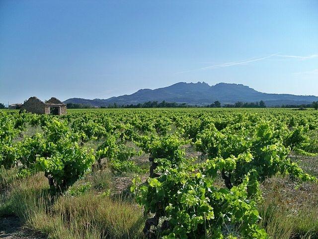 Vignoble de Vacqueyras © domaine public