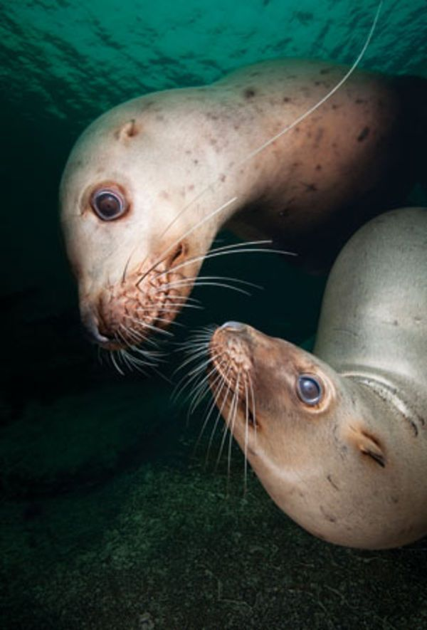World's Best Scuba Diving Sites for Seal and Sea Lion Encounters