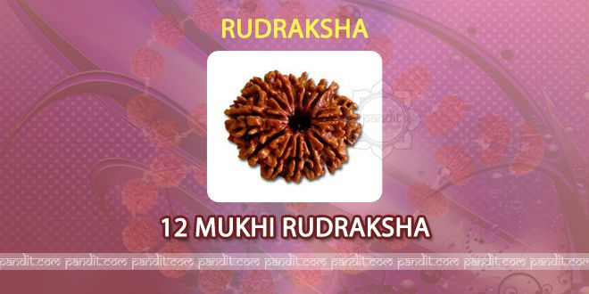 12 mukhi Rudraksh by Pandit Rahul Kaushal  -----------------------------------------------------------  It has 12 lines on it and it is symbol for God Surya. It provides directions like sun rays to the individual who wears it. It is symbol of 12 jyotilings named as Mahakaal, Raameshwaram,Somnaath, Mallika arjun, Onkaareshwar, Vaidhnaath, Bheemshankar, Naageshwar, Vishveshwar, Triyambkeshwar, Kedareshwar, and Dharumeshwar. http://www.pandit.com/12-mukhi-rudraksh/