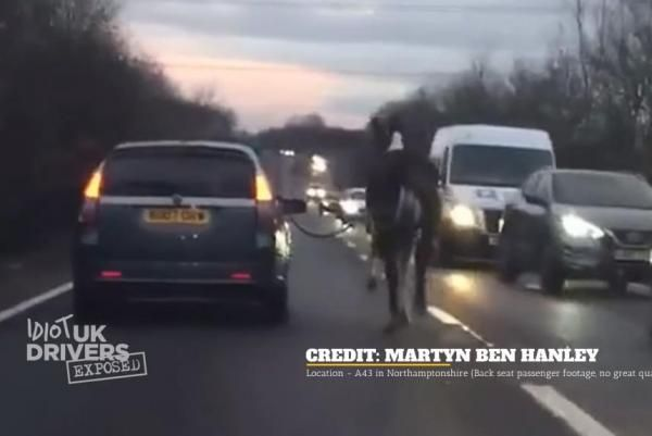 Driver blasted for walking horse next to car on busy road