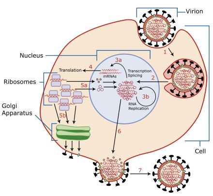 Influenza - Wikipedia