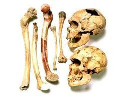 Poco faltó para que a los neandertales se los conociera como calpenses, en honor de un cráneo de tipo neandertal hallado en 1848 en la cantera Forbes en Gibraltar: Calpe es el nombre clásico de Gibraltar. Sin embargo, el hallazgo del cráneo gibraltareño precedió en 8 años al de la cueva Feldhofer en el valle del río Neander.  El nombre científico Homo neanderthalensis fue creado por William King (1863).