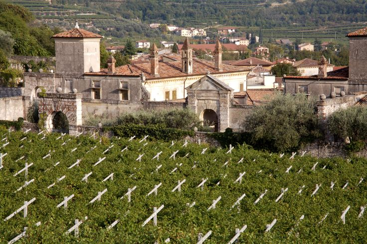 Get to know #Valpolicella from Allegrini. A very friendly Italian red #wine.