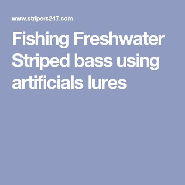 Fishing Freshwater Striped bass using artificials lures
