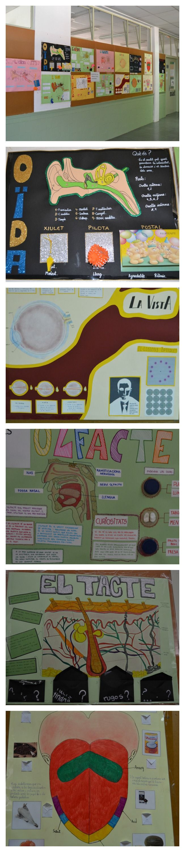 Murals interactius sobre els sentits. 3r d'ESO.