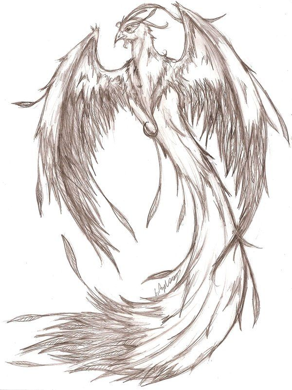 pencil sketch by mavericktears on deviantart ok