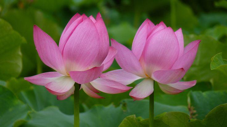 faire livrer des bouquets à domicile 082 #fleurs #bouquet