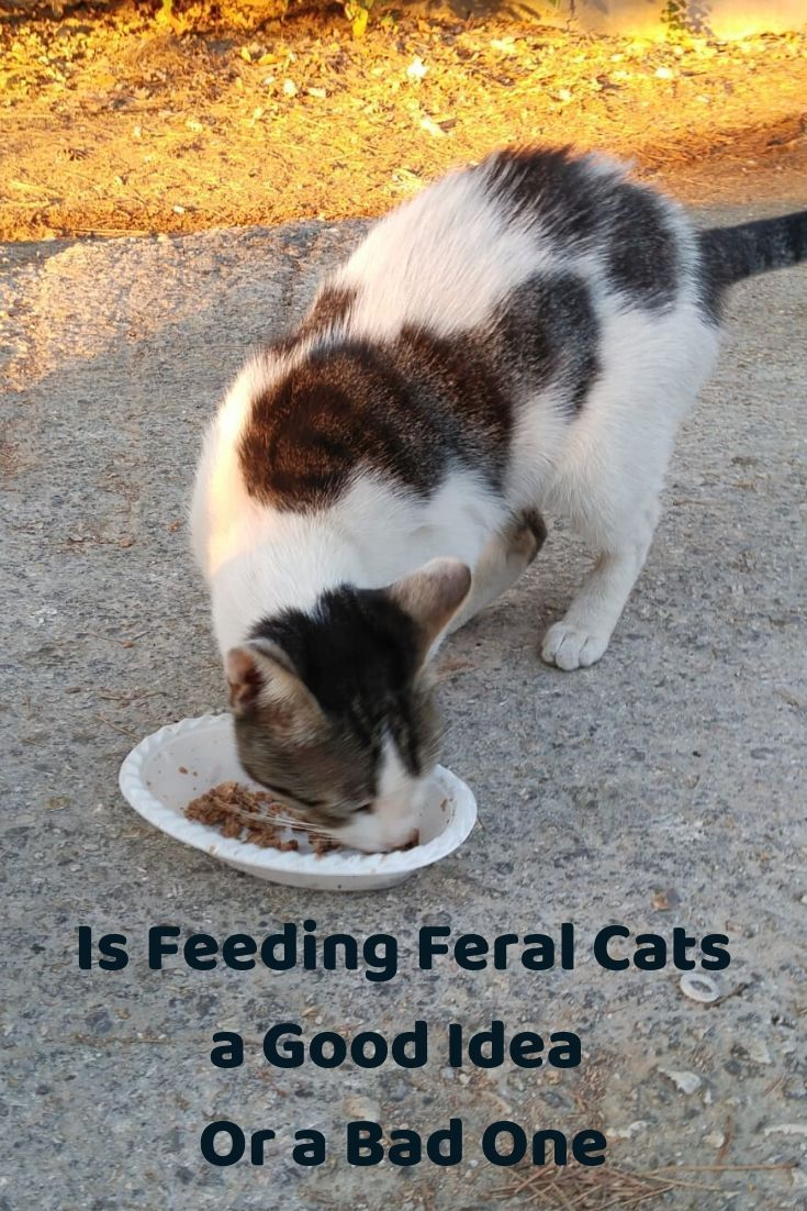 Lots Of Disagreement Over Whether Or Not Feral Cats Should Be Fed What Do You Think Compassion Communitycats Fer In 2020 Feral Cats Pet Sitters International Cats