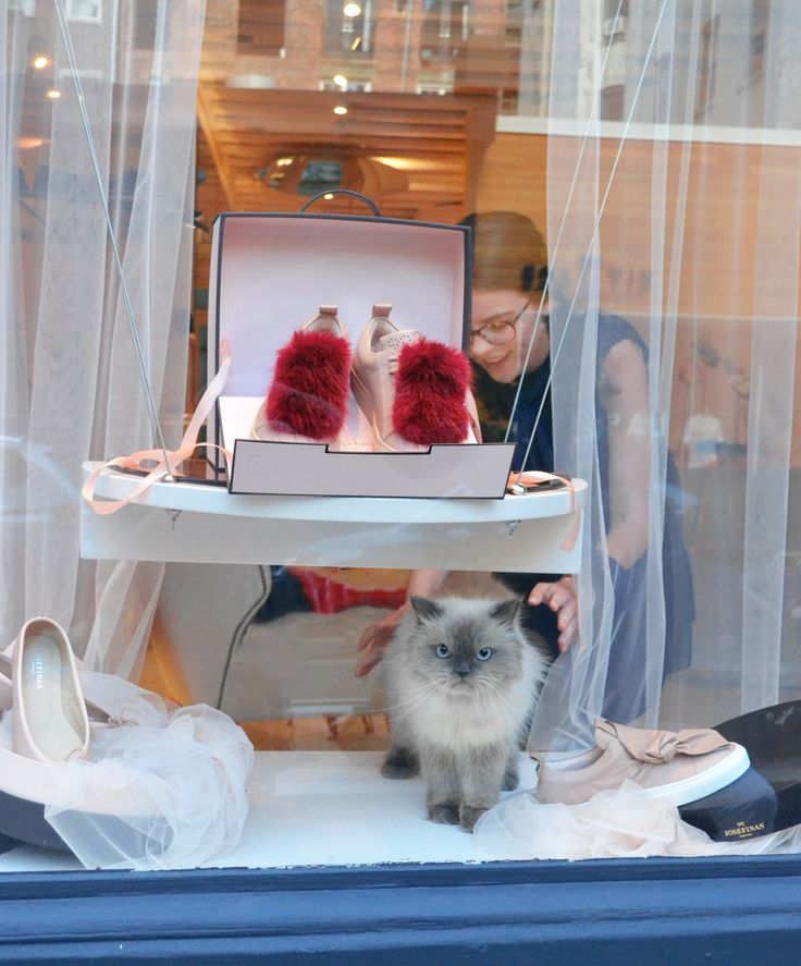 So much fluffiness going on at Josefinas' NYC flagship with Rukas, the cat. #JosefinasCatSeries