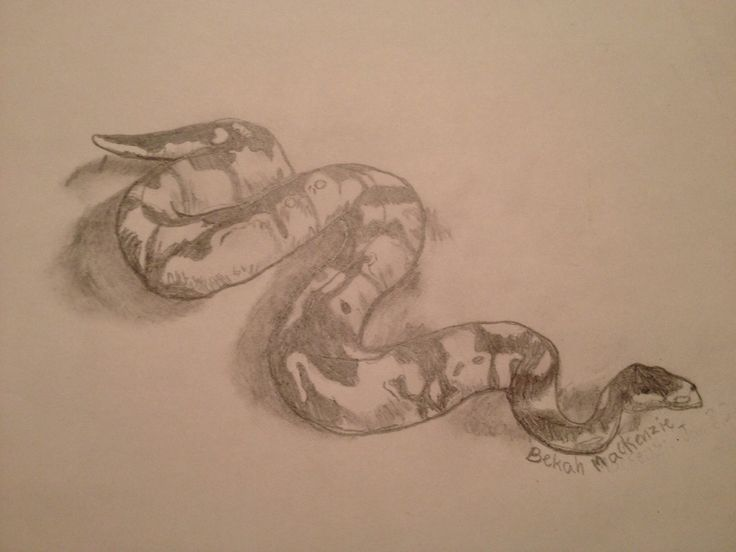 Snake by Bekah M. Age 11