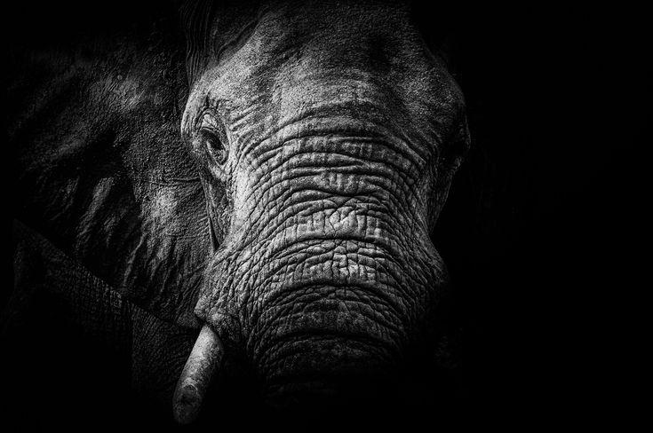 """Monochrome feelings"" in Mana Pools National Park, Zimbabwe ©Andrea Galli"