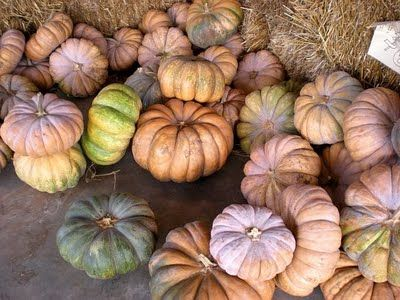 I really want one of these this year - Fairytale Pumpkins
