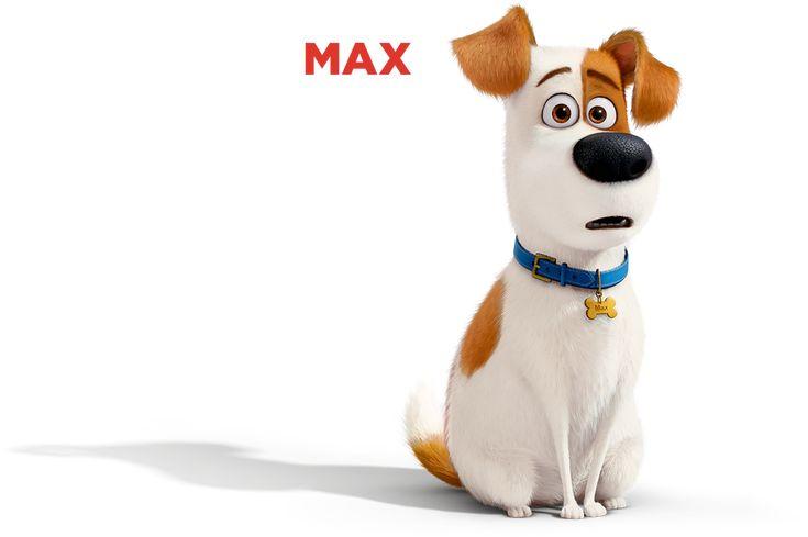 Max egy végtelenül hűséges, ám izgága sima szőrű terrier, aki gazdája, Katie kényeztető szeretetében él Manhattan belvárosában. Az ajtónál ül minden nap, miután Katie elmegy, és alig várja, hogy hazajöjjön, mert annyira, de annyira hiányzik neki.
