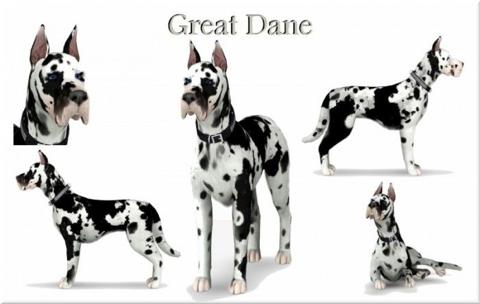 Great Dane pet dog by Jack's Creations - Sims 3 Downloads CC Caboodle