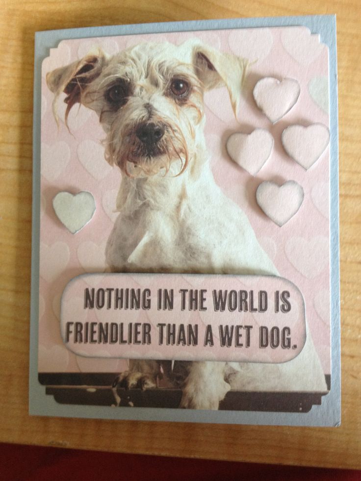 """Nothing in the world is friendlier than a wet dog.  Made with """"not too serious"""" Recollections Signature Paper pad bought at Micheals in Canada.  I cut out the dog from a larger paper and attached to a gray card base then I cut out the wording and some hearts from the leftover paper added some ink to the edges and used dimensional stickers to make them stand out. Easy card, perfect for a dog lover."""