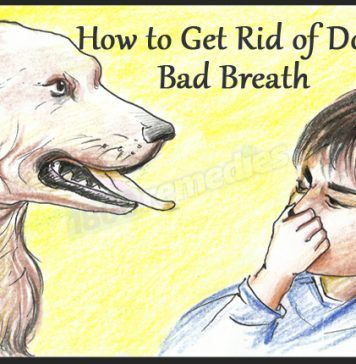 Is Bad Breath Of Your Dog Is Troubling You If Yes Then