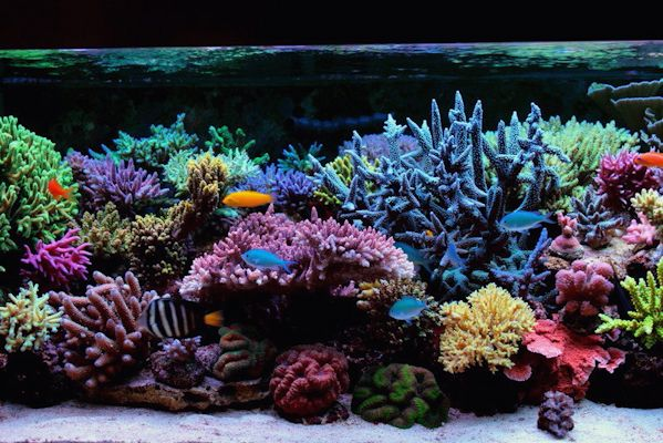 how to clean saltwater tank equipment