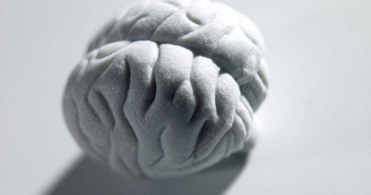 Cómo hacer un molde de cerebro con espuma de poliuretano. Los modelos de cerebro son usados en las ferias de ciencias y en las fiestas de Halloween. También son usados como ayuda para estudiar en clases de anatomía y neurociencia. Los modelos no siempre muestran todas las partes del cerebro. Algunas no muestran el cerebelo, por ejemplo. Sin embargo, usualmente muestran los hemisferios y algunos detalles ...