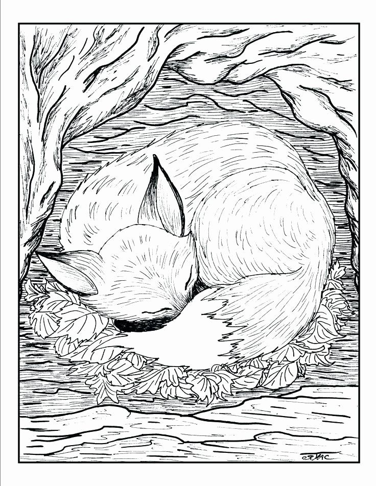 Animal Coloring Sheets For Adults Awesome Realistic Animal Coloring Pages For Adults In 2020 Fox Coloring Page Detailed Coloring Pages Animal Coloring Pages
