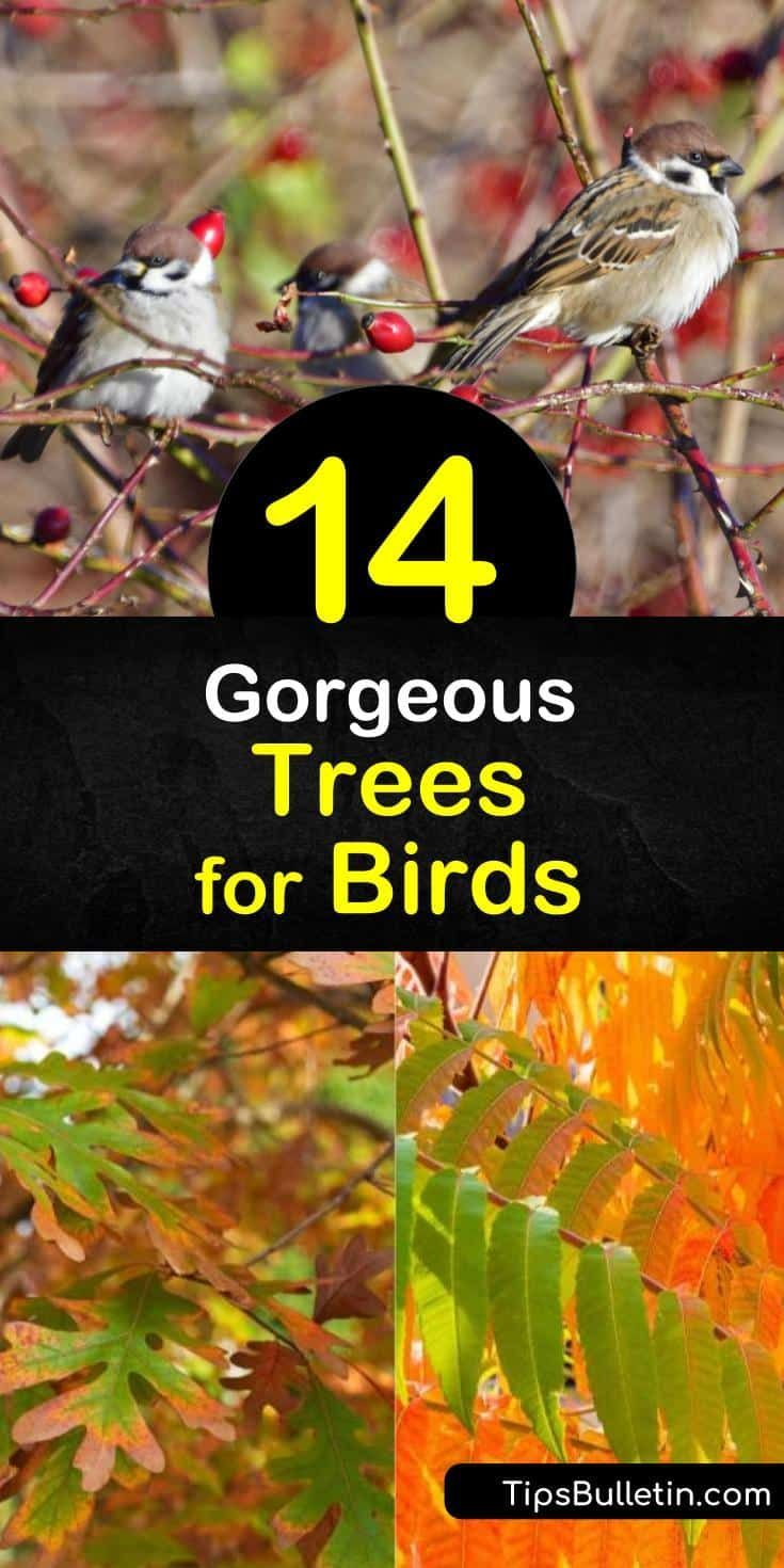 b2fc8fa7f17312f3592c5b7fa74d1c19 - How To Get Rid Of Birds In Your Trees