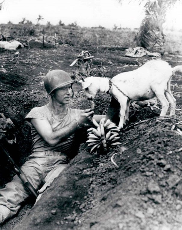 Soldado dividindo uma banana com uma cabra durante a batalha da Espanha de 1944