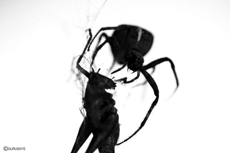 #spider #natgeo #vsco #instagram #gurusays #b&w