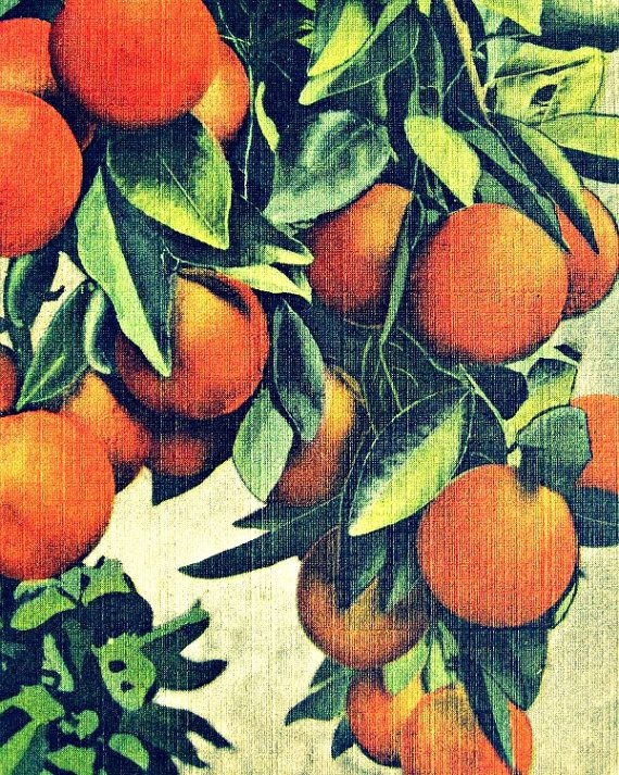 ORANGES Photograph 11x14 kitchen color print, vintage botanical photo tropical art deco, citrus, 1930s, green, cream sunny Florida, wall art...