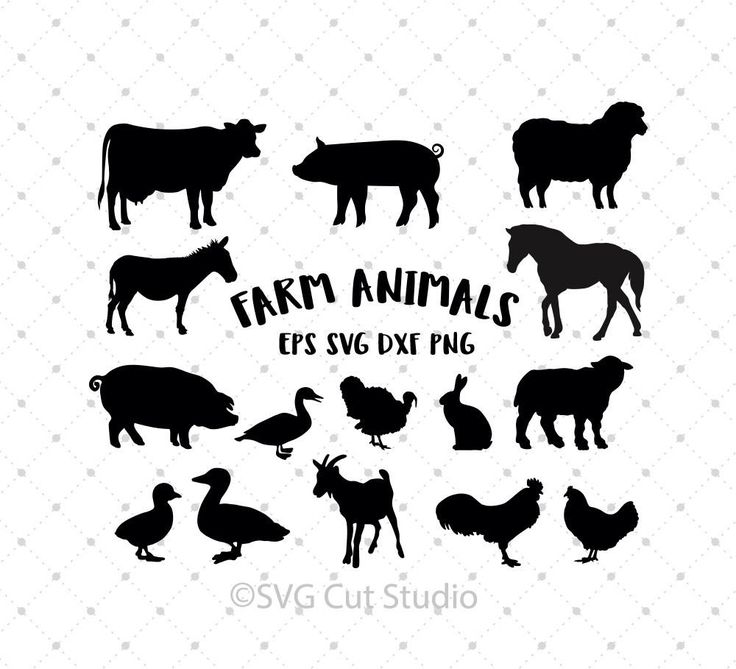 27 Best Images About Animals Pets Svg Cut Files On Pinterest