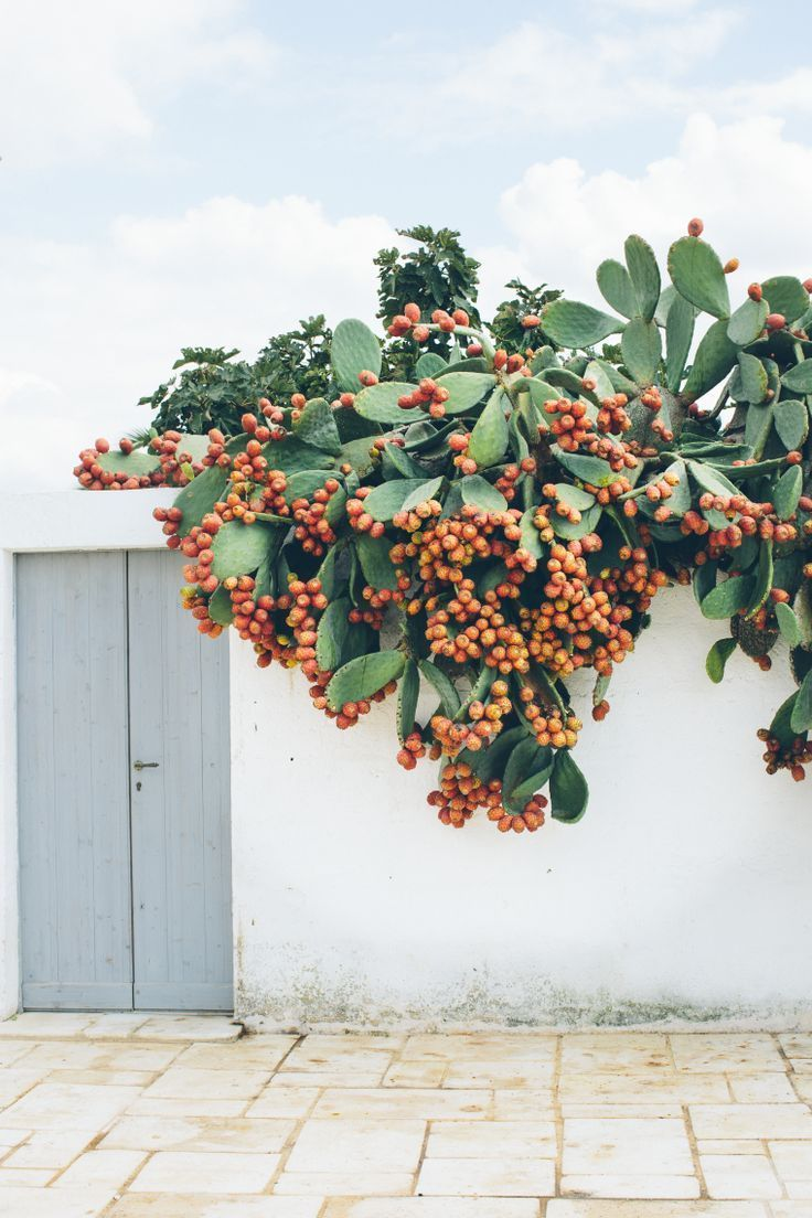 best Inspirations  Patterns u Colors images on Pinterest