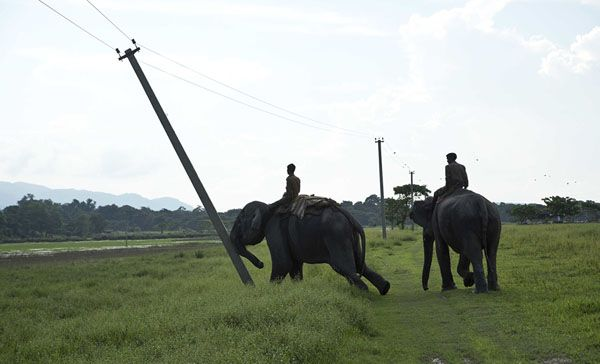 A mahout (elephant rider) guides a forest department elephant to demolish power cable poles on the periphery of the Kaziranga National Park, northeastern Assam state, India, on September 19, 2016. Authorities ordered the demolition of around 300 houses in three villages to evict people living on the periphery of the rhino sanctuary to stop rampant poaching of the rare animal, a top police official said.